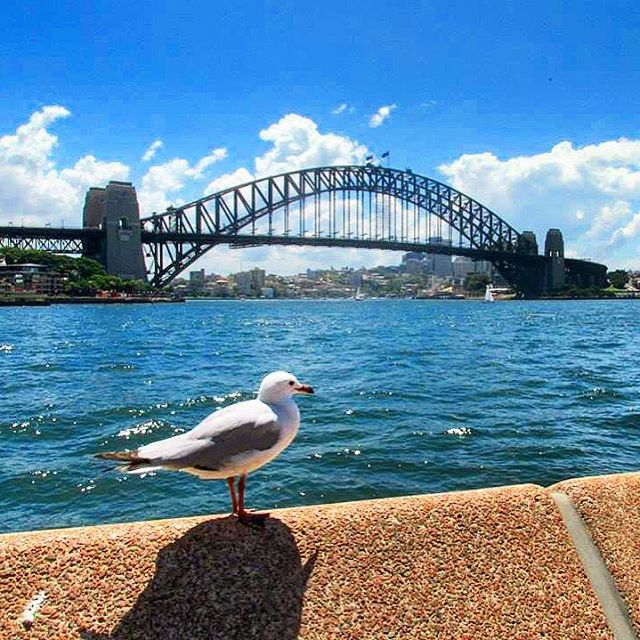 TravelTuesday Throwback to Sydney Harbour Bridge  have you everhellip