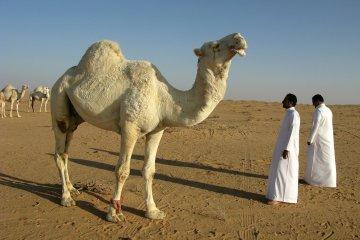 travelling to saudi arabia travel tips tourist visa