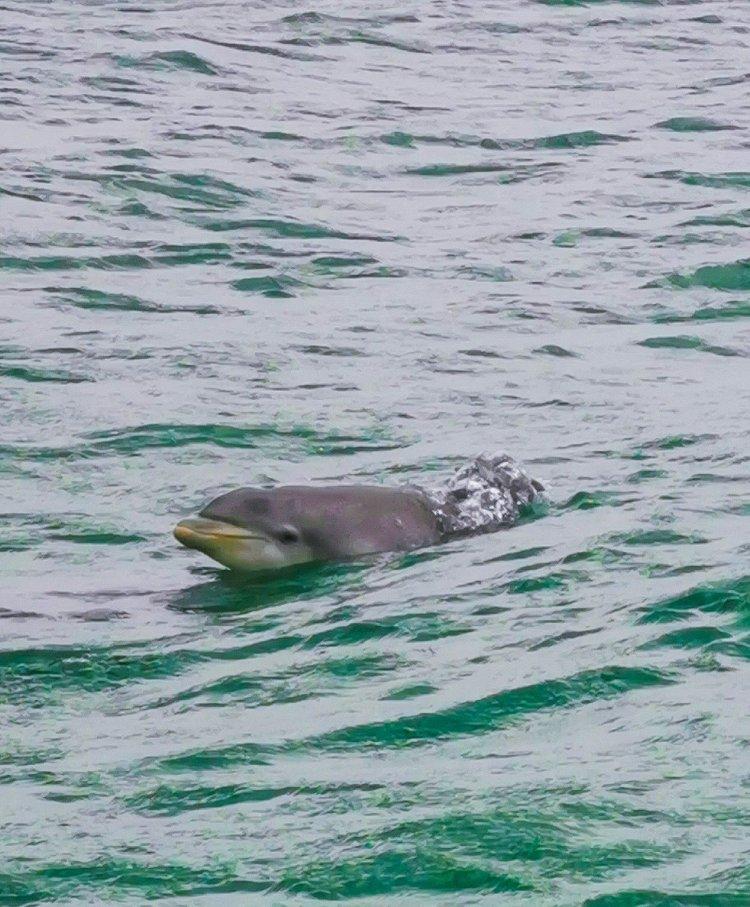 shell island panama city beach florida dolphins