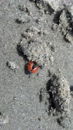 My ladybug friend.