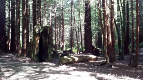 Jackson Forest Campground