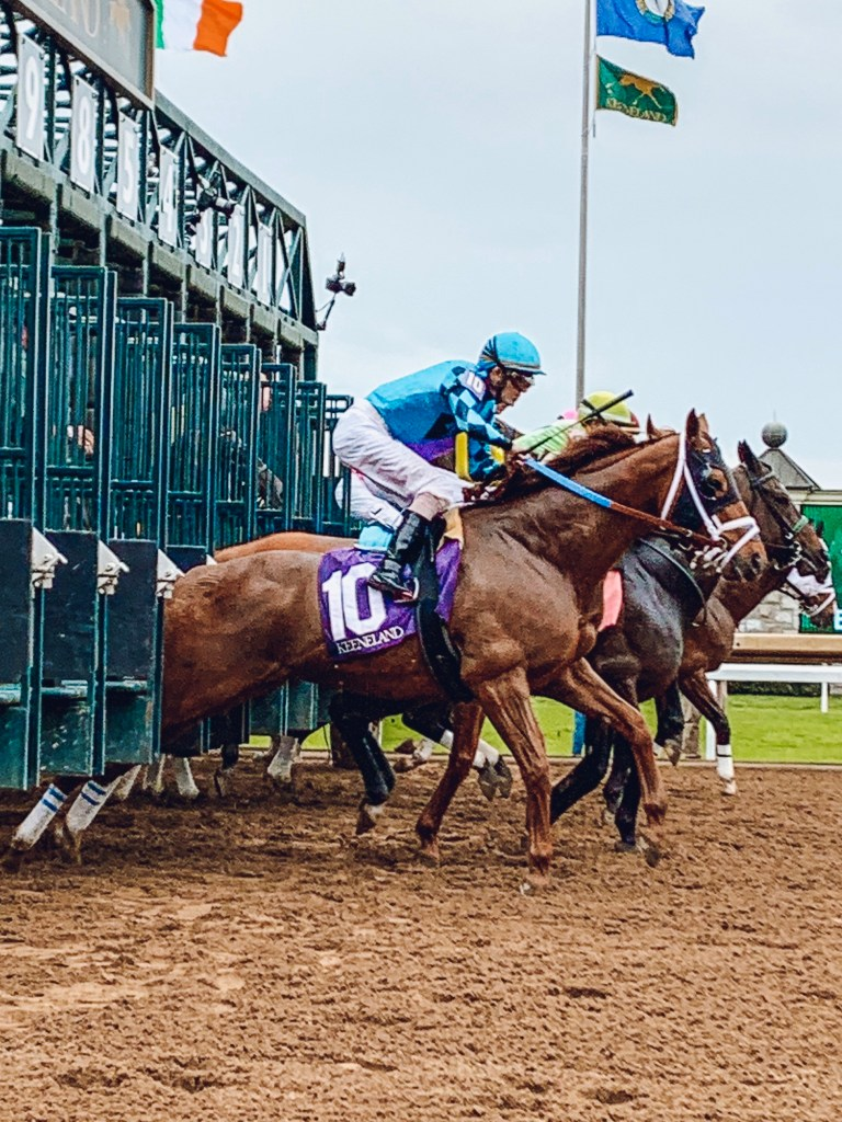Thoroughbred horses leaving the starting gate at Keeneland Race Track in Lexington, Kentucky. Keeneland is a great place to see fall colors in Kentucky.