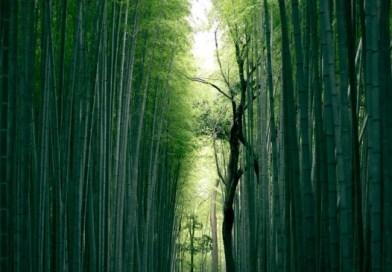 10 อันดับเมืองท่องเที่ยวในประเทศญี่ปุ่น-Wherejapan-ญี่ปุ่นไปไหนดี