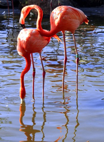 flamingo-04 BY CHARLEBOIS
