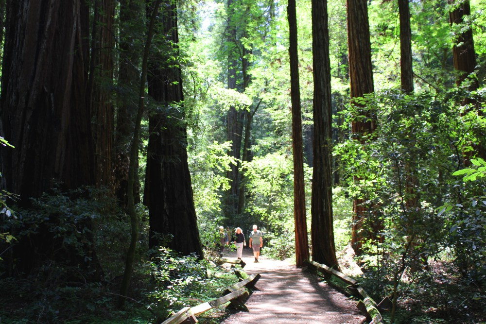 Bathing Among Redwoods. Photos by Mary Charlebois.