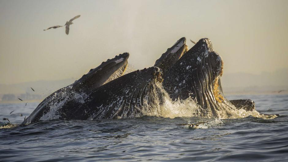 Whale watching in the Monterey Bay