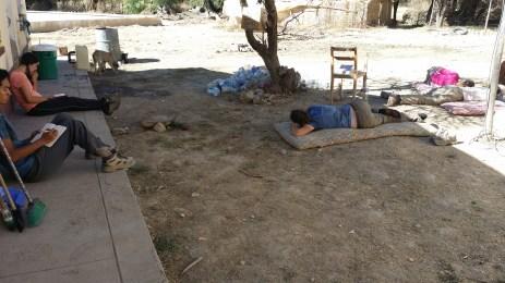 A typical siesta