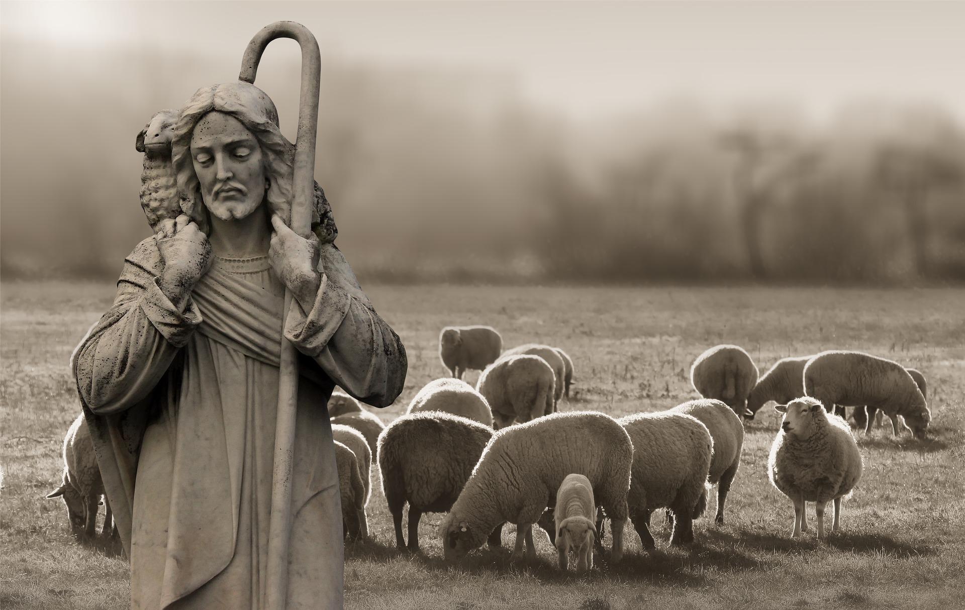 Sheep Gotta Sheep