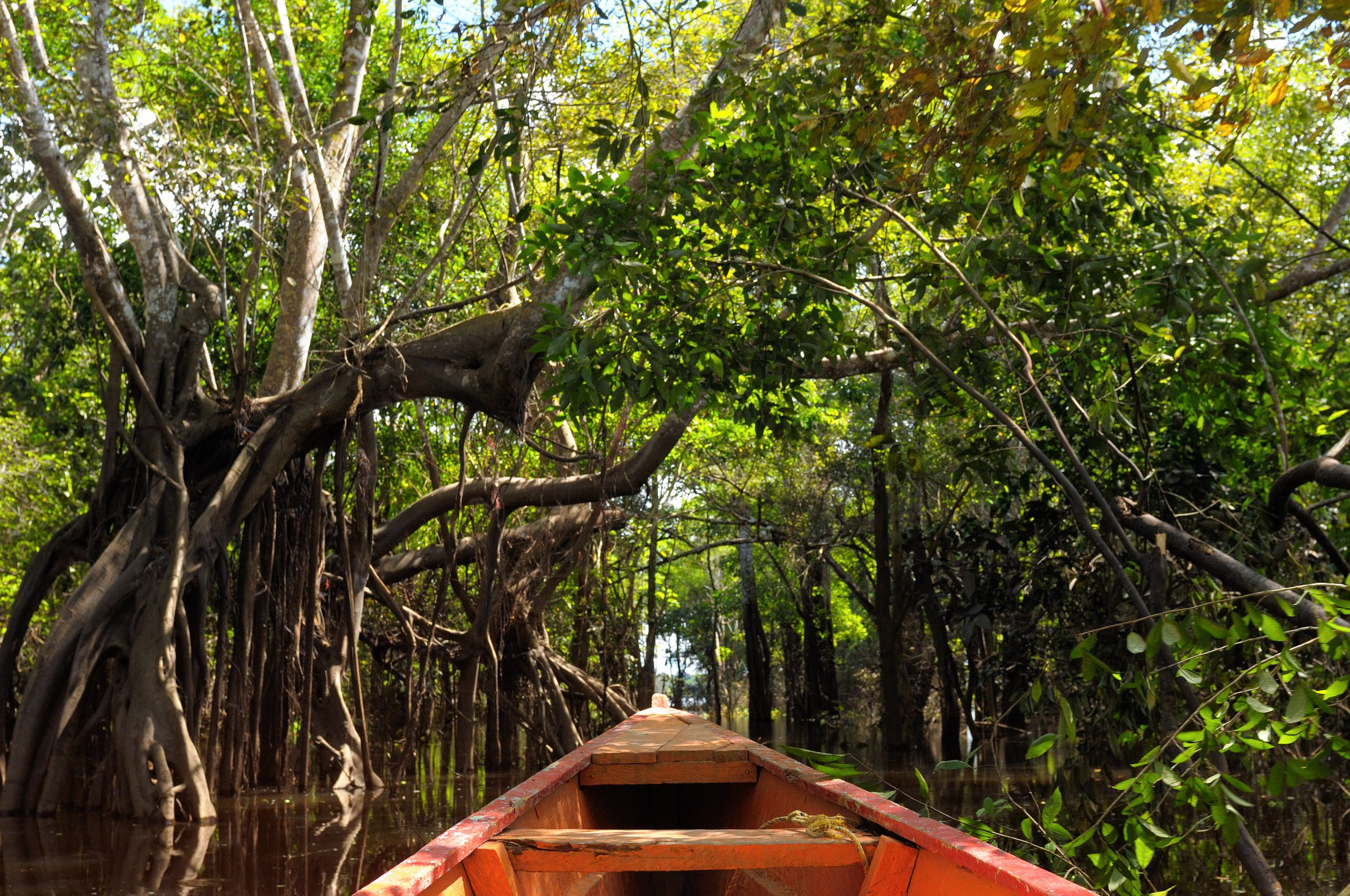 Querida Amazonia: An Opportunity