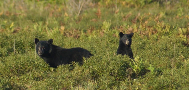 bear and baby3