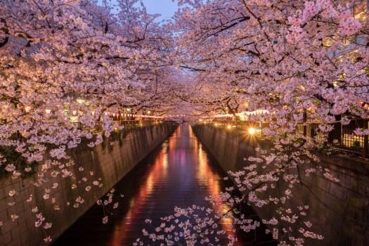 Meguro River Tokyo