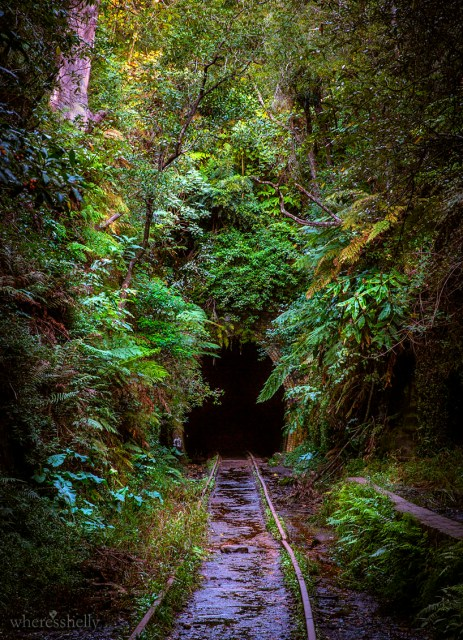 helensburgh-glow-worm-tunnel-entrance.jpg