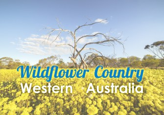 Wildflower Country, Western Australia