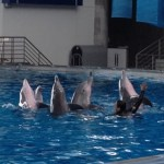 Dolphin Show at the National Aquarium
