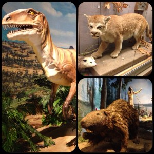 Various displays that you might see at the Kenosha Public Museum!