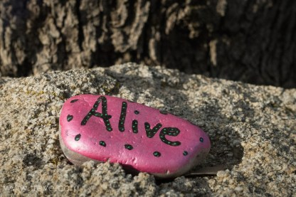 Alive - a painted stone found in our campsite.