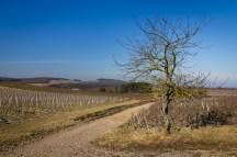 Mercurey vineyards