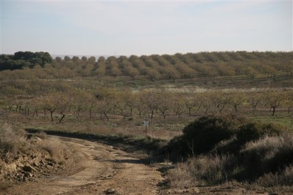 Fruit orchards between Huesca and Ejea