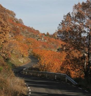 autumn-colour-1