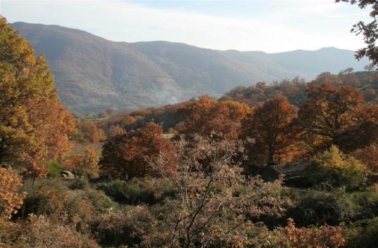 autumn-colour