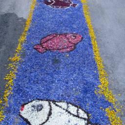 Spello - street art with infiorate
