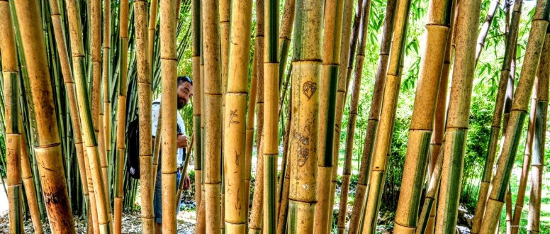 Bamboo - where the foodies go 5