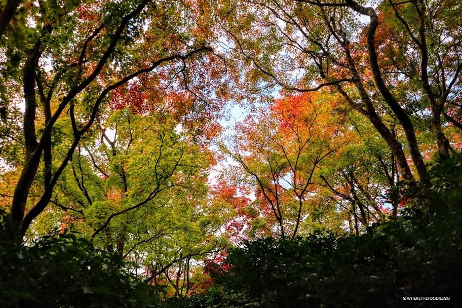 Arashiyama Okochi Sanso, Kyoto