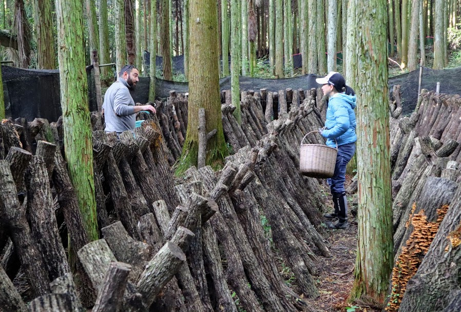 Maruka Farm, fungaia - Kyushu