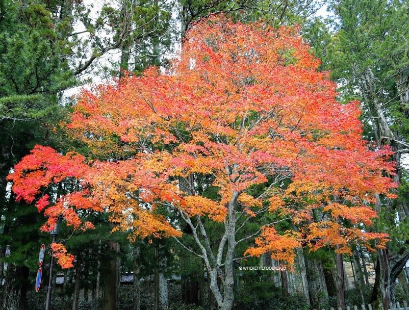 Koyasan, Giappone