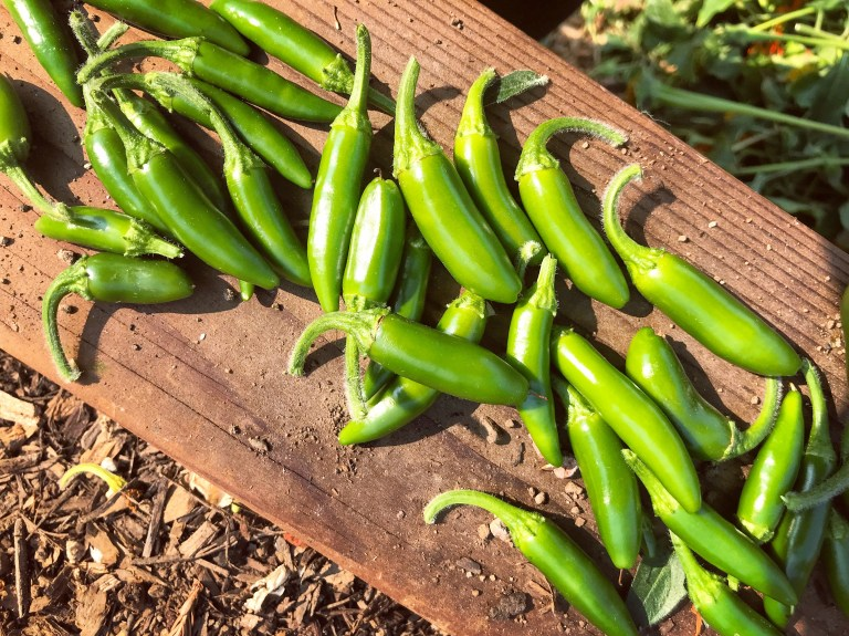 hildalgo peppers