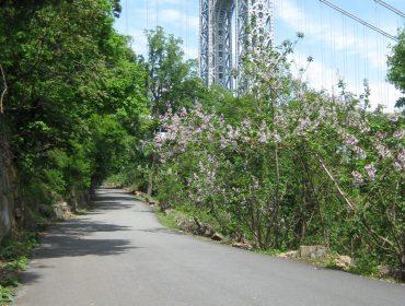Bike Riding River Road Nyack