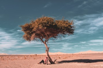 Lone Tree Sahara - After