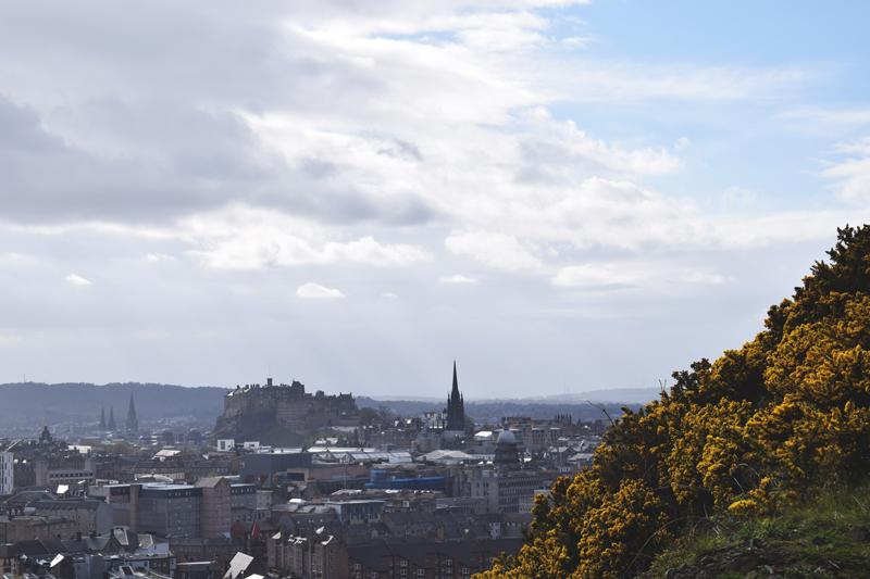 Hike-Up-Arthurs-Seat-Edinburgh-Scotland---Wild-Gorse-Flowers-Bushes---Day-walk