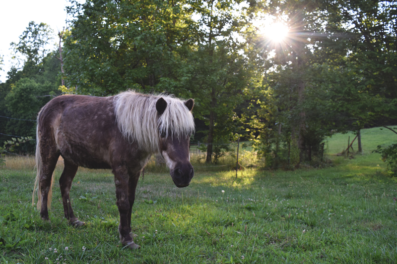Ginger-the-pony-at-our-Air-BNB-on-Lookout-Mountain-in-Chattanooga-Tennessee