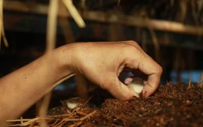Mushrooms, Migration, & Opportunities