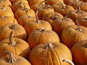 Pumpkin Festival, Morgan Hill CA