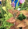 spider_5845