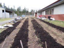 snack garden beds with compost_0395