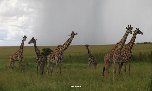 The Masai Mara National Reserve