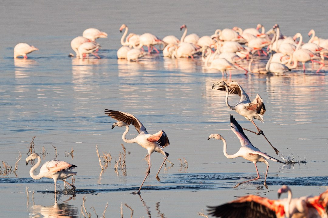 Pink Flamingos.whileinafrica