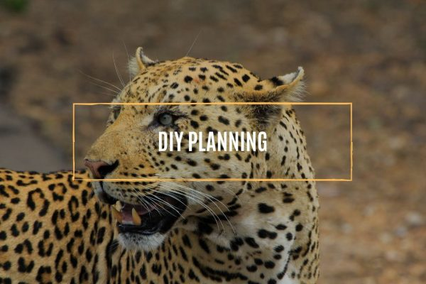 diy-planning.whileinafrca