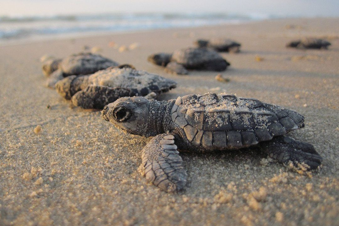 hatchlings on the shore.whileinafrica