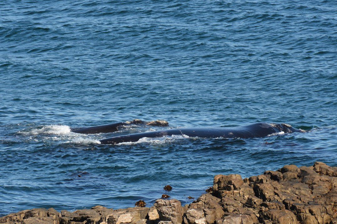 whales on south africa.whileinafrica