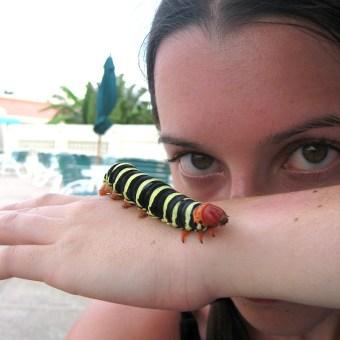 Awesome Handmade Toys: Weird Bug Lady
