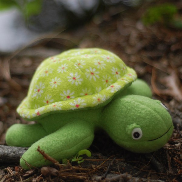 Scooter the Turtle