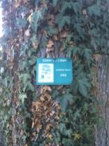 Cedar of Lebanon2, Evian, France