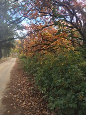 Autumnal glory!