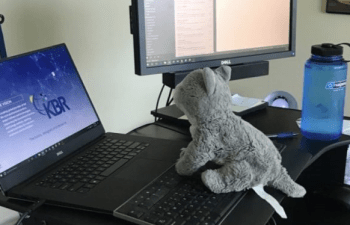 Bring a Stuffed Animal to Work Day: A Free, Sweet Parenting Idea