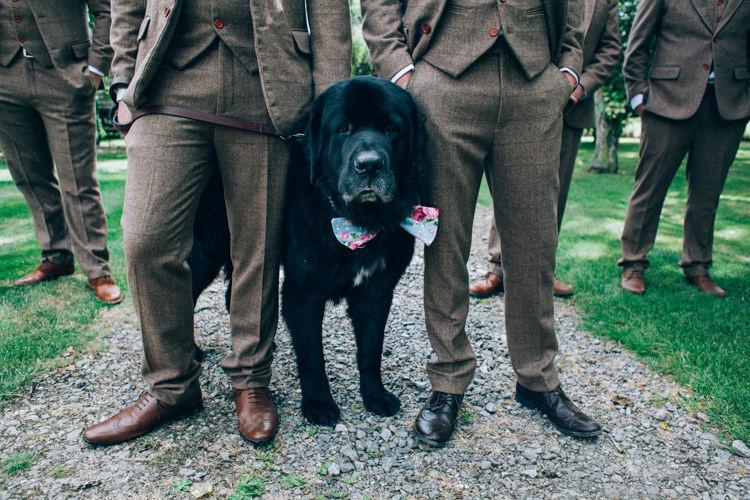 Pet Dog Ring Bearer Flowery Bohemian Secret Garden Wedding https://caseyavenue.co.uk/