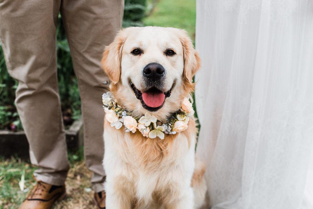 Dog Pet Colourful Bohemian Floral Wedding Ideas Anna Beth Photography
